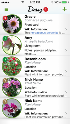 Daisy Summary Page iPhone.png